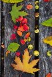 秋天背景在木的空间的复制叶子 免版税库存图片