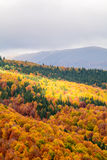 秋天背景在森林 森林的垂直的看法,顶边 图库摄影