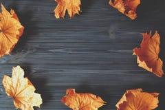 秋天背景安排文本 背景离开葡萄酒 库存图片