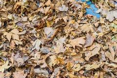 秋天背景干燥叶子 免版税库存照片