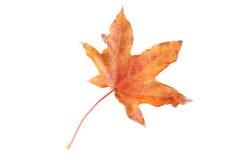 秋天背景查出的叶子白色 免版税库存照片