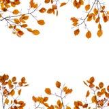 秋天背景框架 在被隔绝的分支的黄色叶子 免版税图库摄影