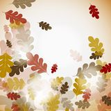 秋天背景橡木 免版税库存照片