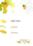 秋天背景橡树 库存图片