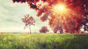 秋天背景特写镜头上色常春藤叶子橙红 五颜六色的树风景在草甸的 明亮的太阳通过树分支  秋天场面 免版税库存图片