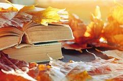 秋天背景特写镜头上色常春藤叶子橙红 堆在桌上的旧书在干燥黄色槭树秋叶中 免版税库存图片