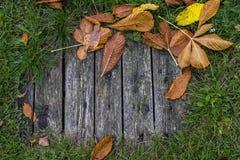 秋天背景特写镜头上色常春藤叶子橙红 栗子,绿草灰色老委员会,黄色和橙色叶子  库存图片