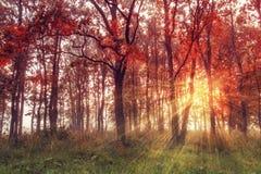 秋天背景特写镜头上色常春藤叶子橙红 秋天场面 五颜六色的森林风景秋天的 免版税库存图片