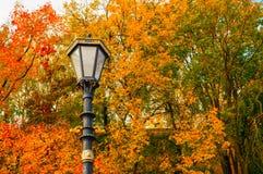 秋天背景特写镜头上色常春藤叶子橙红 金属化在秋天树的背景的灯笼 免版税库存图片