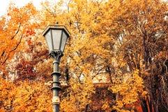 秋天背景特写镜头上色常春藤叶子橙红 金属化在秋天树的背景的灯笼 库存照片