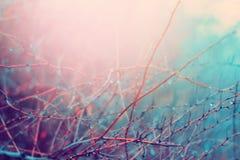 秋天背景特写镜头上色常春藤叶子橙红 免版税库存照片