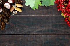 秋天背景特写镜头上色常春藤叶子橙红 荚莲属的植物的水多的红色莓果,烘干叶子,橡子,锥体,栗子 免版税库存照片