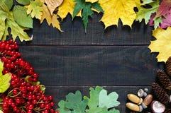 秋天背景特写镜头上色常春藤叶子橙红 荚莲属的植物的水多的红色莓果,烘干叶子,橡子,锥体,栗子 库存图片