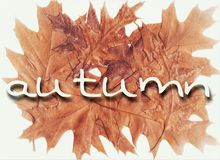 秋天背景特写镜头上色常春藤叶子橙红 免版税图库摄影