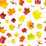秋天背景特写镜头上色常春藤叶子橙红 下落的叶子样式 免版税库存图片