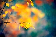秋天背景特写镜头上色常春藤叶子橙红 自然场面 库存照片