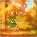 秋天背景特写镜头上色常春藤叶子橙红 向量例证