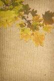 秋天背景特写镜头上色常春藤叶子橙红 皇族释放例证