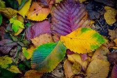 秋天背景生叶无缝的纹理向量 库存图片