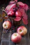 秋天背景用在木板的苹果 免版税图库摄影