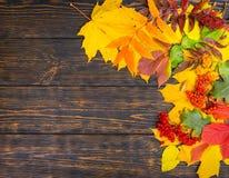 秋天背景用花揪和黄色,红色叶子 库存照片