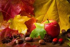 秋天背景用苹果,坚果,色的槭树叶子,玫瑰色和茴香 免版税库存照片