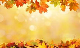 秋天背景离开槭树 免版税库存照片