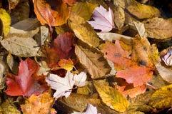 秋天背景离开纹理 库存照片