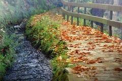秋天背景秋天留下槭树 库存照片