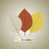 秋天背景秋天留下槭树 库存图片