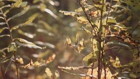 秋天背景秋天留下结构树 股票视频