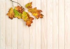 秋天背景红色黄绿色留下木纹理 免版税库存图片