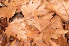 秋天背景组离开橙色室外 室外 免版税图库摄影