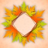 秋天背景美丽的叶子槭树 库存图片