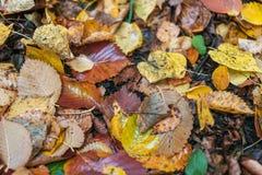 秋天背景美好的例证向量 叶子是黄色老地球上在秋天天 免版税库存照片