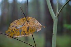 秋天背景美好的例证向量 在分支的漏的叶子 免版税库存照片