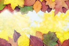 秋天背景美好的例证向量 免版税库存图片