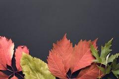 秋天背景美好的例证向量 免版税库存照片