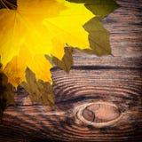 秋天背景色的叶子 免版税库存照片