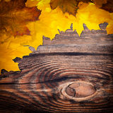 秋天背景色的叶子 图库摄影