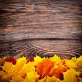 秋天背景色的叶子 库存图片