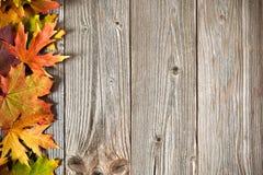 秋天背景色的叶子 库存照片
