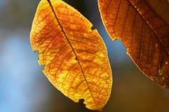 秋天背景花卉色彩 免版税库存照片