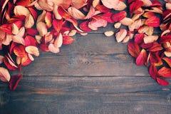 8秋天背景董事会上色了eps文件包括的叶子木 库存照片