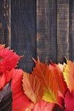 8秋天背景董事会上色了eps文件包括的叶子木 免版税图库摄影