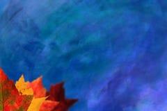 秋天背景蓝色叶子 免版税库存图片