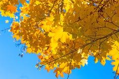 秋天背景蓝色留下天空 库存照片
