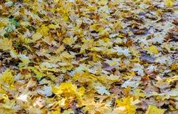 秋天背景计算机例证叶子 图库摄影