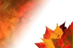 秋天背景退了色叶子 免版税库存照片