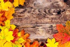 秋天背景,五颜六色的树叶子 免版税图库摄影